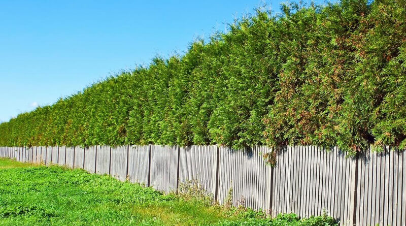 Jak udržovat dřevěný plot