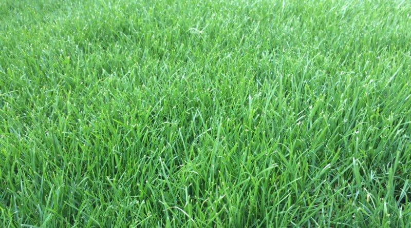 Založení trávníku