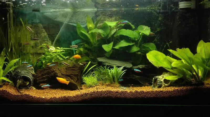 Pořízení akvária